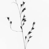 Nature on white background. Black and white nature image on white background. Plant on white background Stock Photo