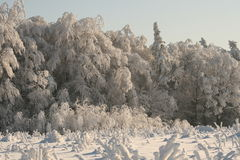 Nature in white winter. Snow covers the forest, nature looks clean and fresh Stock Photos