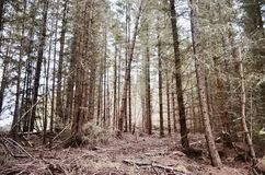 Nature, forest, Scotland. Royalty Free Stock Photos