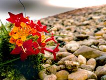 nature.wild flower.blazzling sky.stones. royalty free stock photos