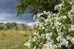 The nature of wild plants in the green areas stock photos