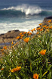 Nature wilderness. Nature scenery, orange flowers in front of brown rocks, water behind edge cliff, blurred white wave coming closer Stock Photography