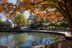Nature and wildlife in the city during fall