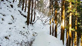 Winter forest in japan. Nature and wildlife concept - winter forest in japan stock footage