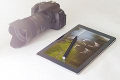 Nature and wildlife photography concept, DSLR, digital tablet Royalty Free Stock Photos