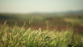Nature and the wind stock footage