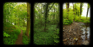 Nature Window. A three window view of nature green scene's with a black frame royalty free stock photo