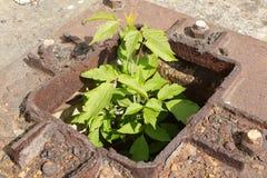 Nature winning over man. Overgrown human remains. Old rusty cut off metal pillar stock photo