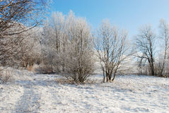 Nature in winter Royalty Free Stock Photography