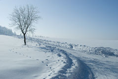 Nature in winter stock photo