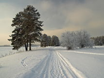 The nature in the winter stock images