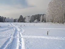 The nature in the winter Stock Photography