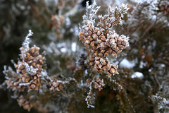 Nature in winter Stock Photography