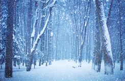 Nature Winter landscape. Beautiful view of the snow-covered alley of the city Park on a winter day. Park during a snowfall. Scenic stock photo