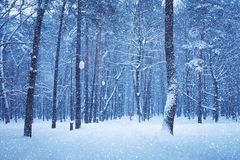 Nature Winter landscape of snow-covered city Park royalty free stock photo
