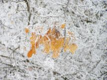 Nature winter leaves tree trees branch stick. Winter is one of four seasons. December, January and February are winter months. Winter is the coldest season royalty free stock image