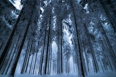 Nature, Winter, Tree, Forest Stock Image