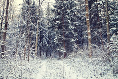 Nature in winter, woodland covered by snow Stock Images