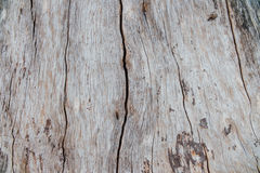 Free Nature Wood Bark Pattern Or Texture. Old Rough Tree Brown Natural Wooden Abstract Background. Royalty Free Stock Photo - 91452865