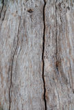 Nature wood bark pattern or texture. Old rough tree brown natural wooden abstract background. Stock Photography