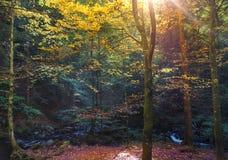 Nature, Woodland, Ecosystem, Forest