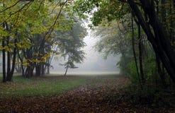 Nature, Woodland, Ecosystem, Leaf royalty free stock photo