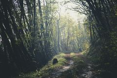 Nature, Woodland, Forest, Tree Royalty Free Stock Image