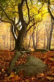 Nature, Woodland, Leaf, Autumn royalty free stock photos