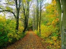 Nature, Woodland, Leaf, Ecosystem royalty free stock photography
