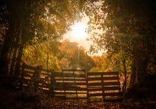 Nature, Woodland, Leaf, Tree stock photography