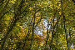 Nature, Woodland, Leaf, Tree stock photo