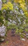 Nature, Woodland, Vegetation, Tree stock photos