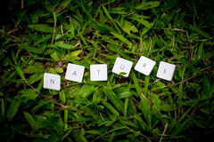 Nature wording. Over the grass Royalty Free Stock Photo