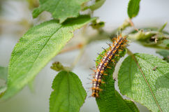 Nature of the worm. Is eatting leave Stock Photos