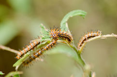 Nature of the worm. Is eatting leave Royalty Free Stock Photography