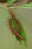 Nature of the worm. Is eatting leave Stock Images
