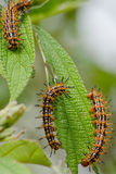 Nature of the worm. Is eatting leave Stock Image