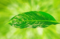 Nature is written on green leaf Royalty Free Stock Images