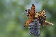 Nature& x27; belleza de s Fotos de archivo libres de regalías