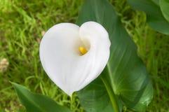 Nature& x27 ; coeur de s Photo stock