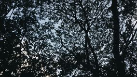 Nature& x27; cortina de s Imagen de archivo