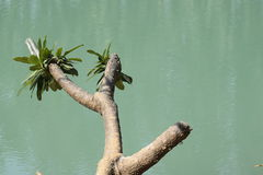 Nature& x27 ; regard de s Photographie stock libre de droits