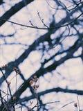 Nature& x27; s-skuggor Fotografering för Bildbyråer