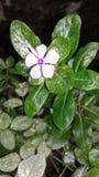 Nature& x27; y x27; belleza de s Imagen de archivo libre de regalías