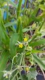 Nature, yellow, Flower, focus. Micro yellow flower Stock Image