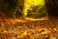 Nature, Yellow, Leaf, Autumn royalty free stock images