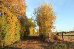 Nature, Yellow, Leaf, Tree stock photo