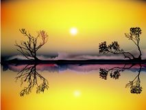 Nature, Yellow, Sky, Branch royalty free stock photo
