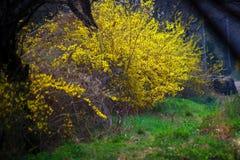 Nature, Yellow, Vegetation, Flora royalty free stock photography