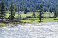 Nature in Yellowstone National Park Royalty Free Stock Photography